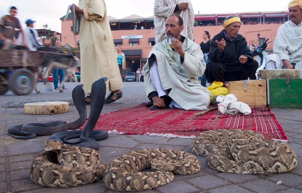 20101014174515_snake_charmers_in_marrakech